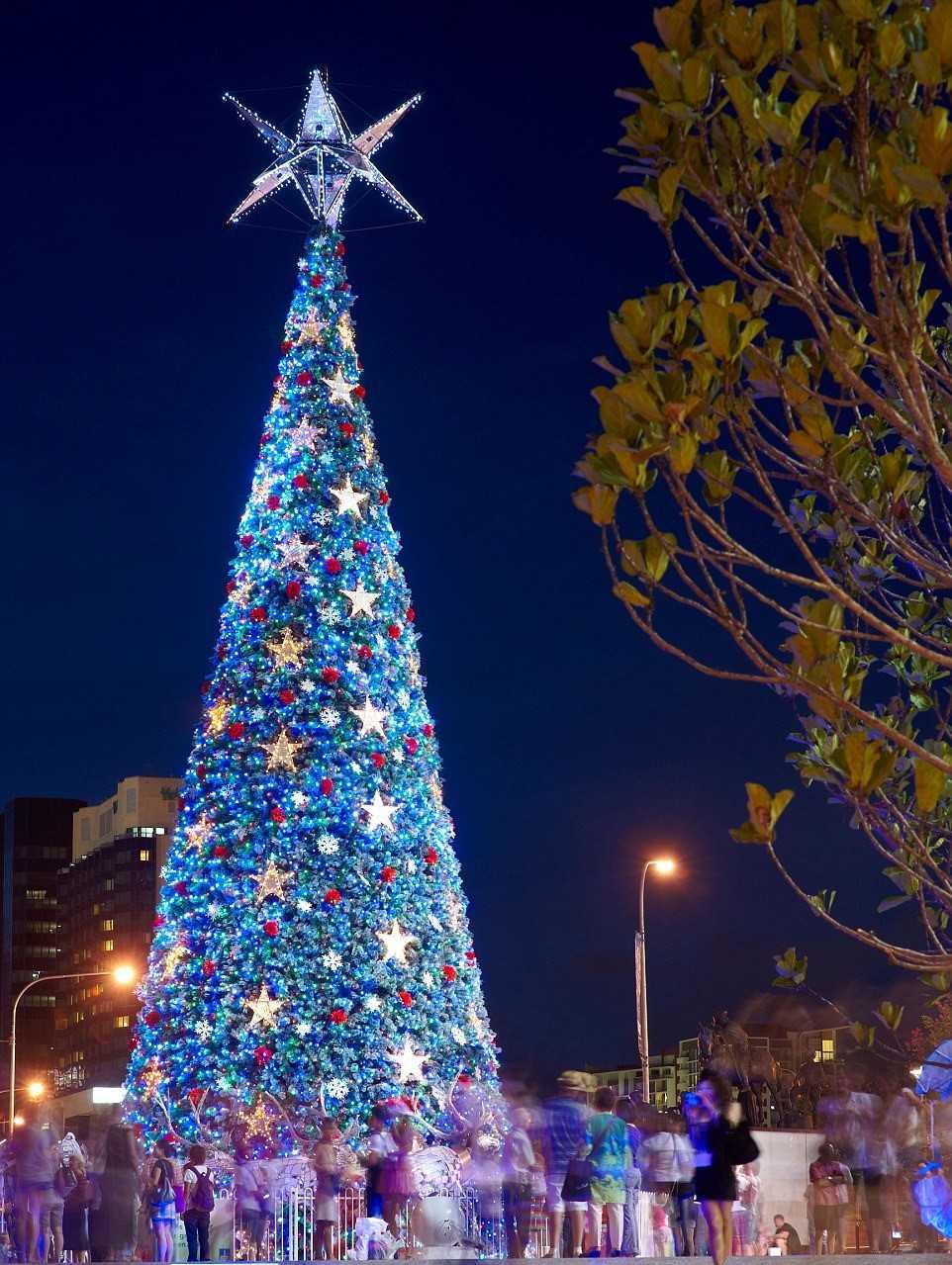 Рождественская елка. Брисбан