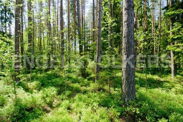 п.Комарово - земельные участки в Курортном районе