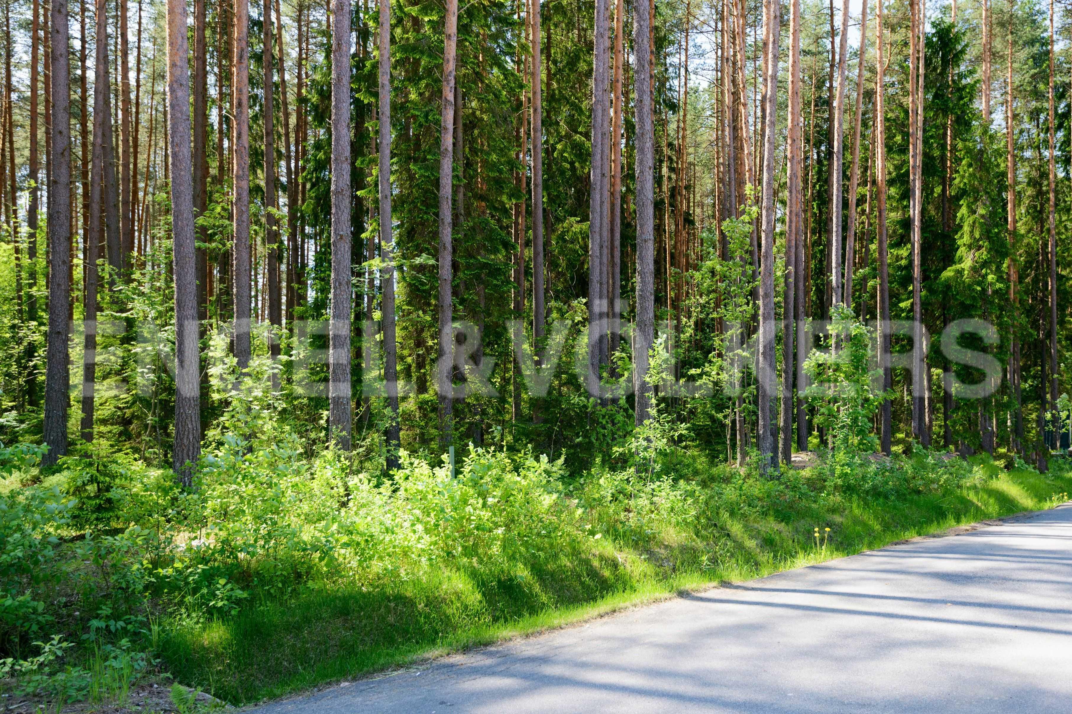 Элитные квартиры в Курортном районе. Санкт-Петербург, п. Комарово. Тропка в лесу