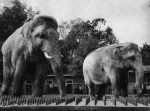 Слоновый двор