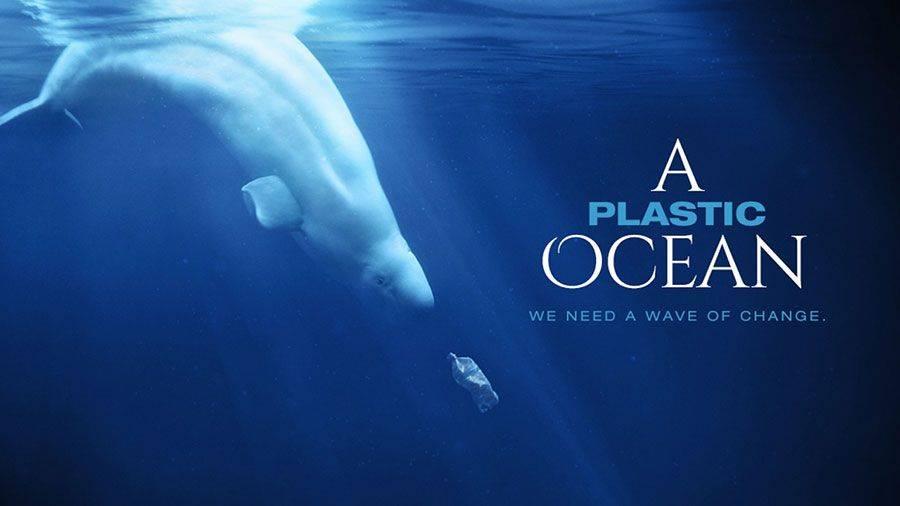 kit-okean