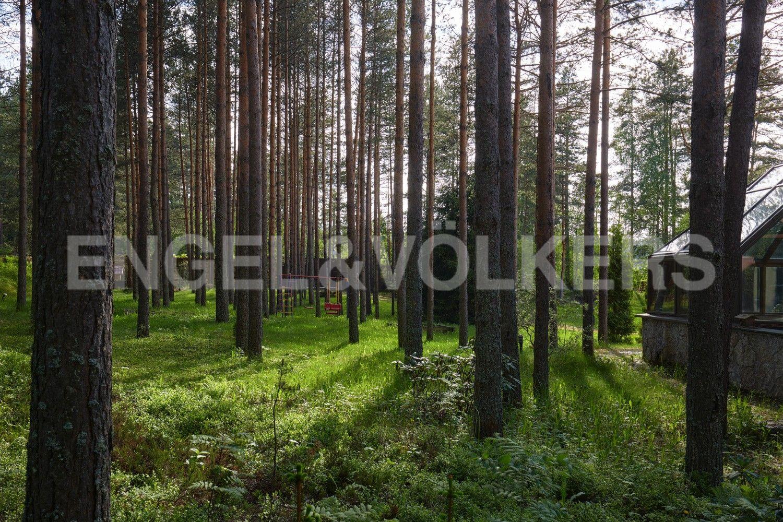 Сосновый лес около дома