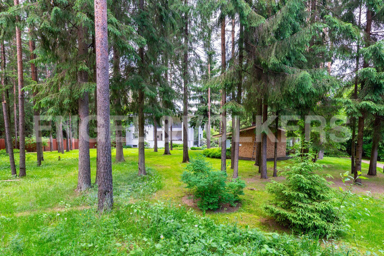 Природный ландшафт участка. Сосновый лес