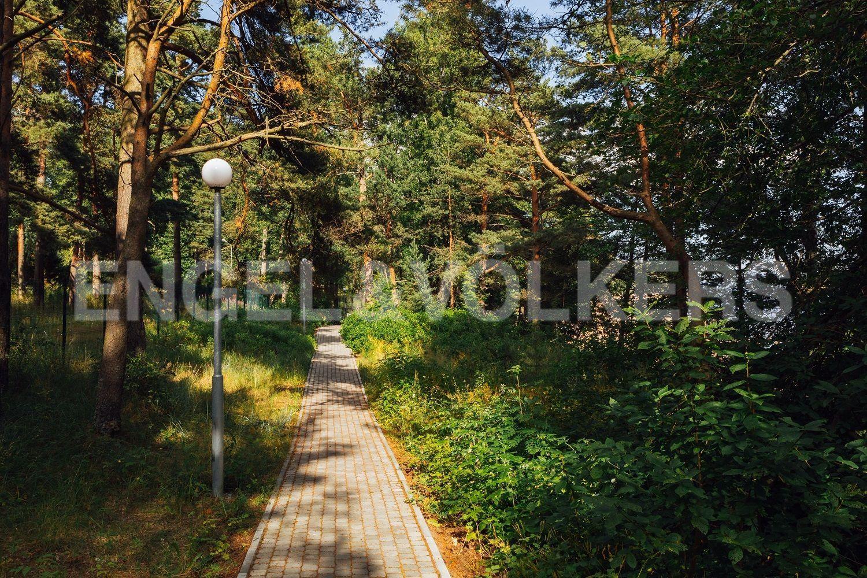 Прогулочные дорожки в парке