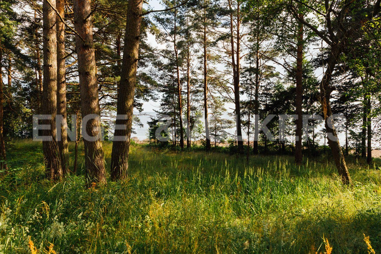 Элитные квартиры в Выборгском районе. Ленинградская область, пос. Пески, участок 1. Участок. Природный ландшафт
