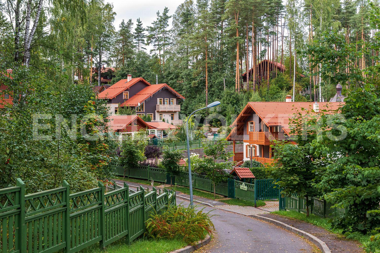 Вид на дома в окружении вековых сосен заказника