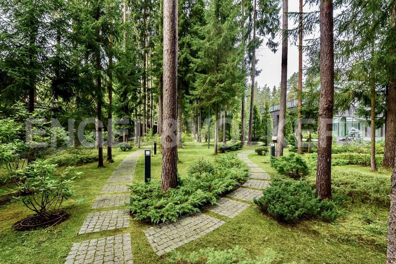Лесной ландшафт на участке