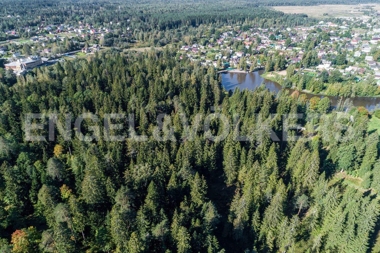 Хвойный лес рядом с участком